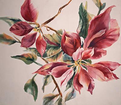 The Poinsettia Art Print by Sharon K Wilson