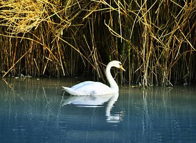 Swan Digital Art - The White Swan by Bill Cannon
