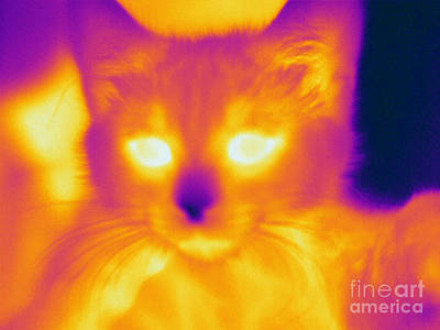 Thermographic Photograph - Thermogram Of A Cat by Ted Kinsman