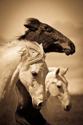 Photograph - Three Horses by Steve McKinzie