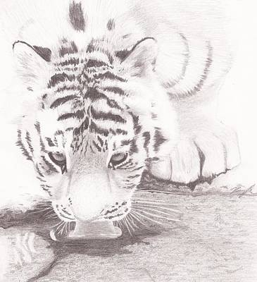 Orsillo Drawing - Tiger By A Creek by Kaylee Axberg