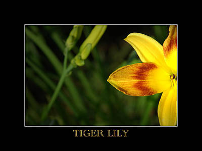 Photograph - Tiger Lily by David Weeks