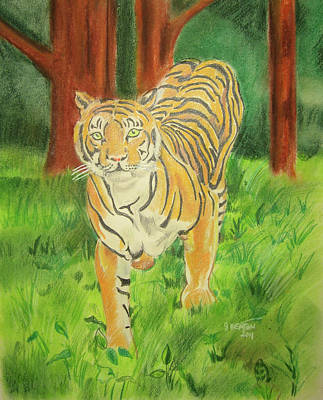 Animals Drawings - Tiger On the Prowl by John Keaton