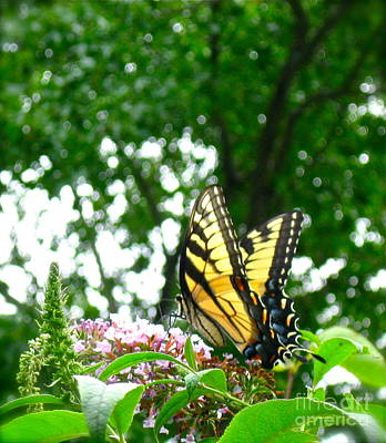 Photograph - Tiger Swallowtail Butterfly  by Nancy Patterson