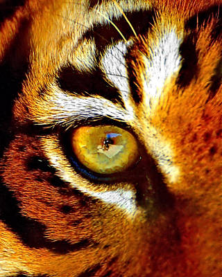 Photograph - Tigers Eye by Marlo Horne