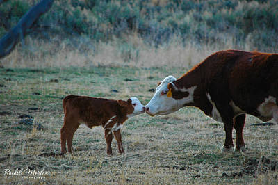 Ranching Photograph - Touching Noses by Rachele Morlan