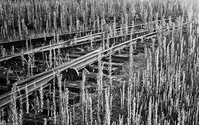 Art Print featuring the photograph Tracks by Michael Nowotny