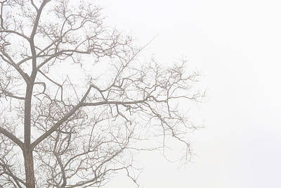 Photograph - Tree Against A White Sky In The Early Morning Hours by Gal Ashkenazi
