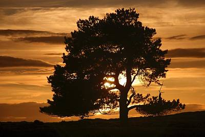 Contre-jour Photograph - Tree At Sunset, North Yorkshire, England by John Short