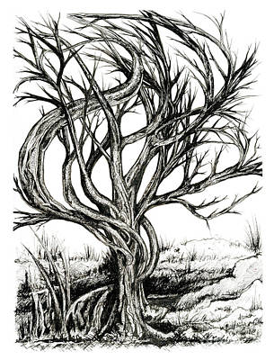 Drawing - Twisted Tree by Danielle Scott