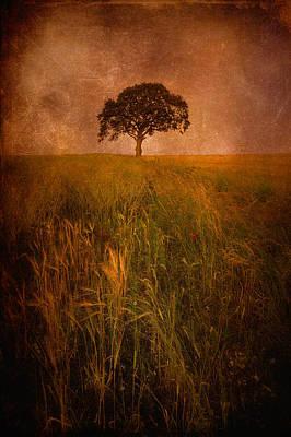 Rural Scenes Digital Art - Tree by Svetlana Sewell