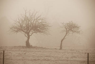 Trees In Fog Art Print