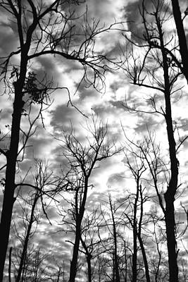 Photograph - Trees In The Sky by Shari Jardina