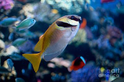Digital Art - Tropical Fish by Carol Ailles
