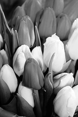 Photograph - Tulips In Black And White. by Bruce Bley