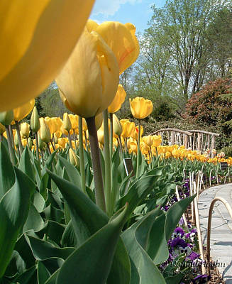 Tulips On Parade Art Print