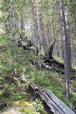Tunguska Forest Art Print