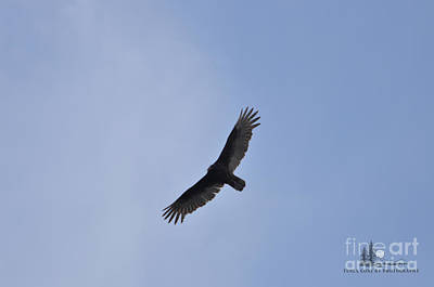 Photograph - Turkey Vulture by Ronald Grogan