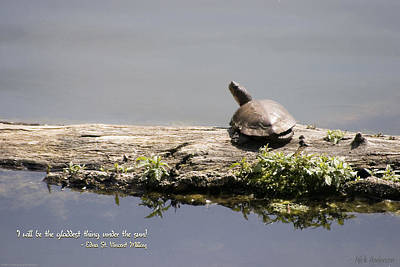Photograph - Turtle On A Log by Mick Anderson