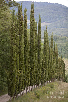 Tuscany Original by David  Rusch
