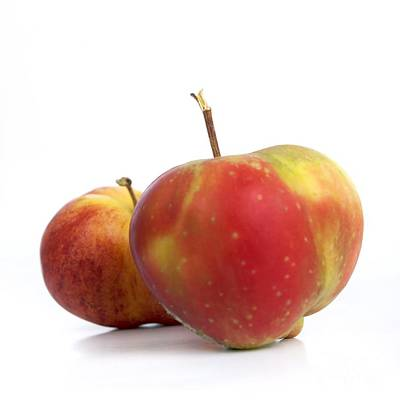 Apple Photograph - Two Apples. by Bernard Jaubert