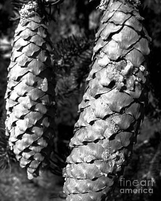 Photograph - Two Pine Cones by Patricia Januszkiewicz