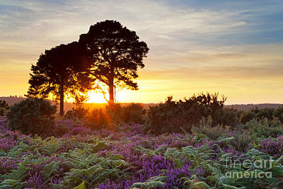 Two Trees In The New Forest At Sunset Art Print by Richard Thomas