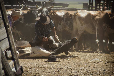 Cowboy Photograph - Tying Down For Doctoring by Megan Chambers