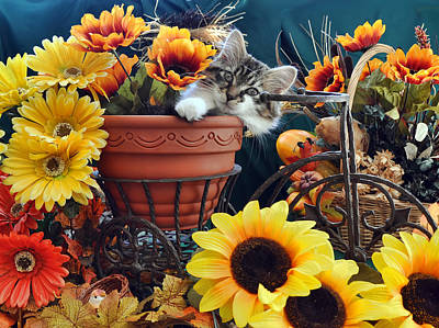 Venus - Cute Kitten In Bicycle Flower Planter - Kitty Cat In Sunflowers And Gerberas Art Print by Chantal PhotoPix