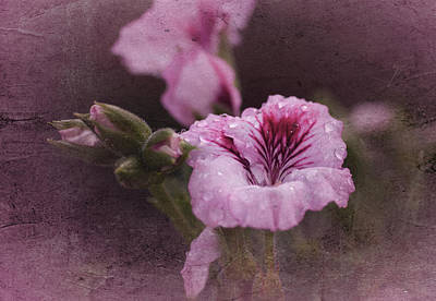 Macro Geranium Flower Photograph - Vintage Geranium by Richard Cummings
