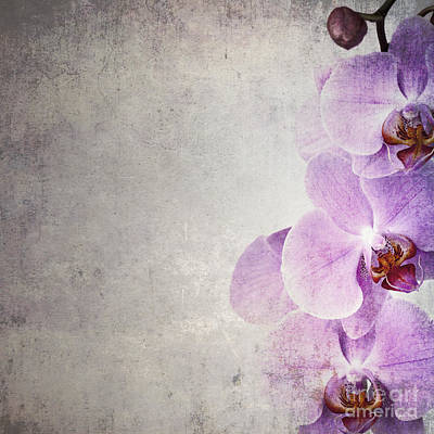 Parchment Photograph - Vintage Orchids by Jane Rix