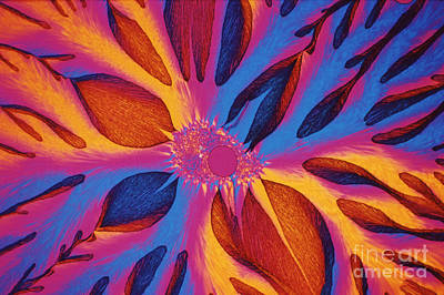 Photograph - Vitamin E Crystals by Michael W Davidson