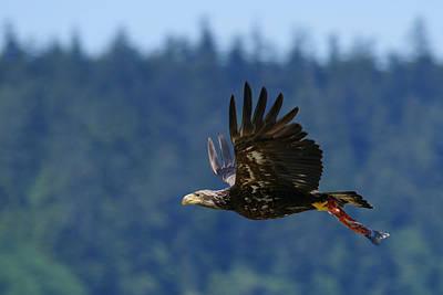 Neah Bay Photograph - Wa-6-12-neah Bay-eagleimm2 by Diana Douglass