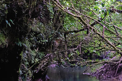 Photograph - Waitomo Caves Entrance by Harry Strharsky