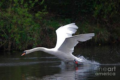 Photograph - Walks On Water by Doug Thwaites