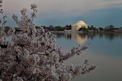 Washington Dc Jefferson Memorial Framed By Cherry Blossoms Original