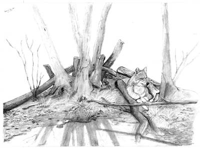 Drawing - Watching Wolf by Peter Edward Green