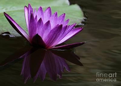 Photograph - Water Lily Reflected by Sabrina L Ryan