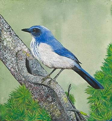Scrub Jay Painting - Western Scrub Jay by Marsha Friedman