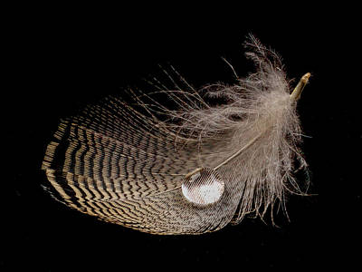 Photograph - Wet Feather by Jean Noren