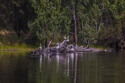 Wetland Wonders Original by Dave Kelly