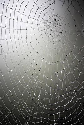 Linda Dunn Photograph - What A Tangled Web.... by Linda Dunn
