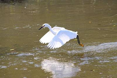Art Print featuring the photograph White Egret by Jeanne Andrews