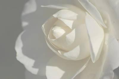 White Art Print by Meeli Sonn
