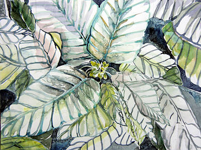White Poinsettia Original by Mindy Newman