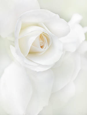 Photograph - White Rose Flower Petals by Jennie Marie Schell