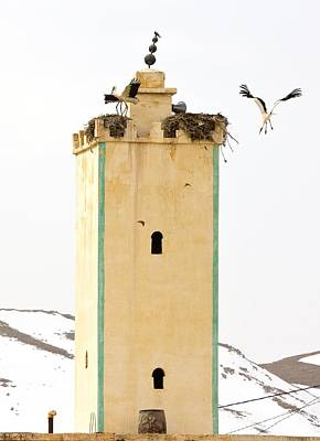 Moroccan Photograph - White Storks Nesting by Bob Gibbons