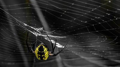 Wicked Web Print by Brian Stevens
