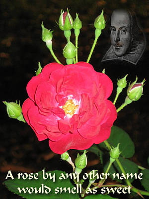 Romeo And Juliet Digital Art - Wild Rose And The Bard by Terry Lynch