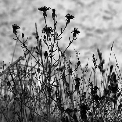 Wildflowers Art Print by Blink Images